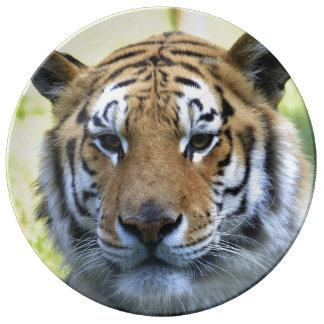 Retrato hermoso del tigre plato de cerámica