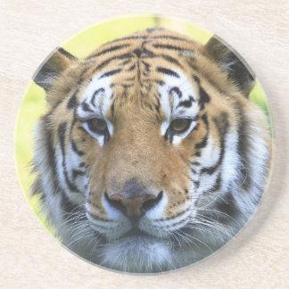 Retrato hermoso del tigre posavasos cerveza