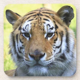 Retrato hermoso del tigre posavasos de bebidas