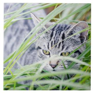 retrato joven del gato azulejo cuadrado grande