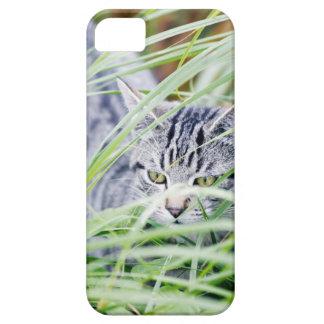 retrato joven del gato iPhone 5 fundas