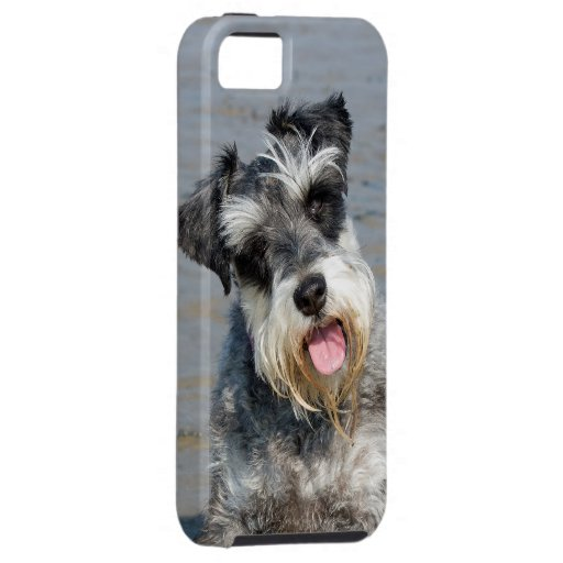 Retrato lindo de la foto del perro miniatura del iPhone 5 fundas