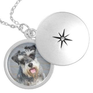 Retrato lindo de la foto del perro miniatura del S Collares Personalizados