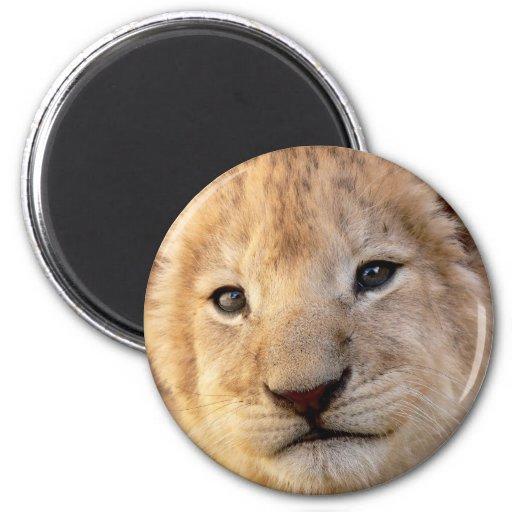 Retrato lindo del cachorro de león imán redondo 5 cm