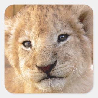 Retrato lindo del cachorro de león pegatina cuadrada
