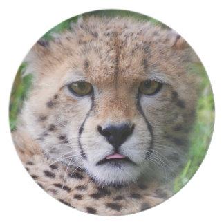 Retrato lindo del cachorro del guepardo plato de cena