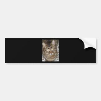 Retrato lindo del gato de Tabby Pegatina Para Auto