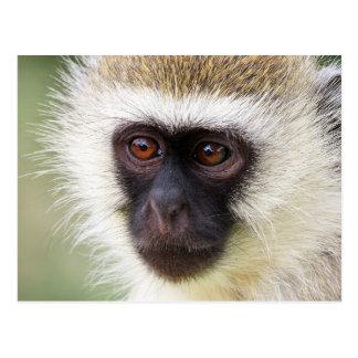 Retrato lindo del mono tarjeta postal