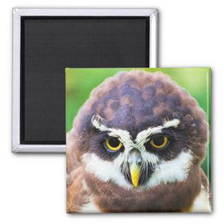 Retrato lindo del Owlet Imán Cuadrado