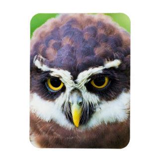 Retrato lindo del Owlet Imanes