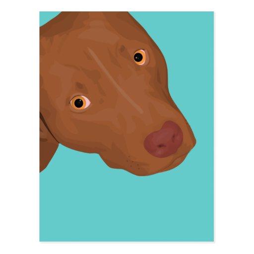 Retrato lindo del pitbull postales