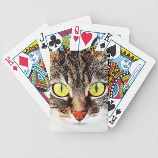 Retrato lindo observado grande del gato barajas de cartas