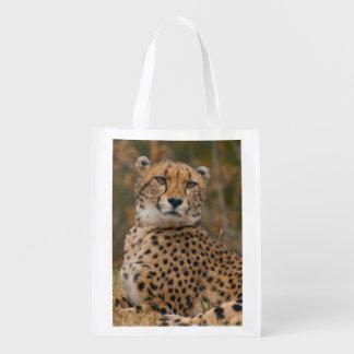 Retrato llamativo del guepardo - gatos salvajes bolsas para la compra