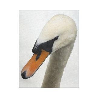 Retrato macro blanco del cisne impresiones en lona estiradas