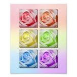Retrato macro de los rosas del arco iris fotografía