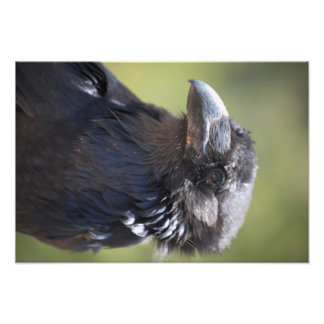 Retrato macro del cuervo arte fotográfico