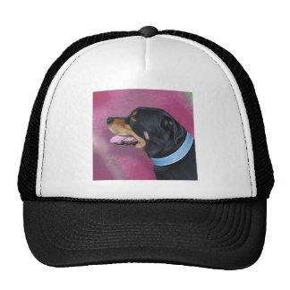 Retrato magnífico de Rottweiler en una pared Gorros