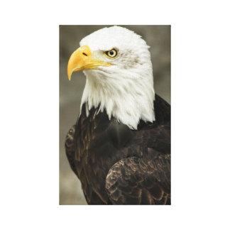 Retrato majestuoso del águila calva impresión en lienzo estirada