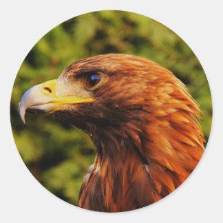 Retrato marrón hermoso del águila pegatina redonda