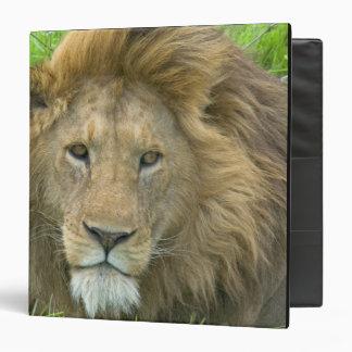Retrato masculino del león la África del Este Ta
