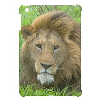 Retrato masculino del león, la África del Este, Ta