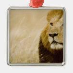 Retrato masculino del león (Panthera leo), Masai M Ornamentos De Reyes