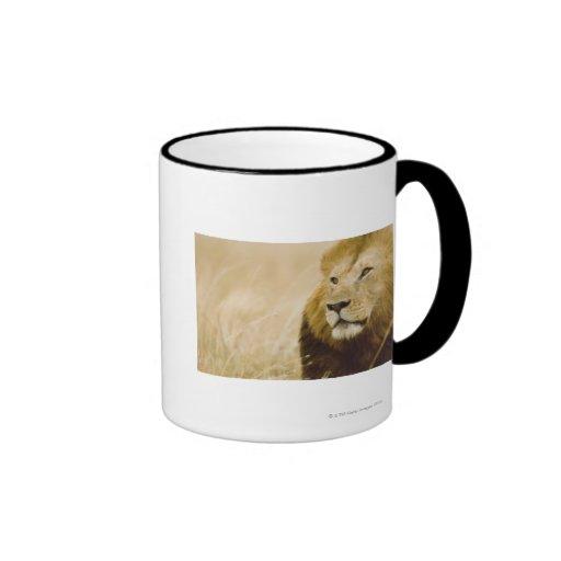 Retrato masculino del león (Panthera leo), Masai M Tazas De Café