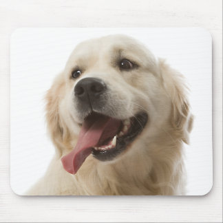 Retrato Mousepad del perro de perrito del golden r Tapetes De Raton