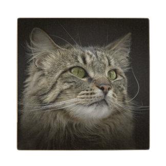 Retrato noruego del gato del bosque