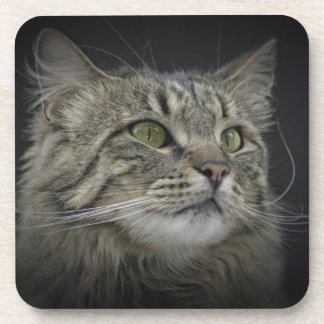 Retrato noruego del gato del bosque posavaso