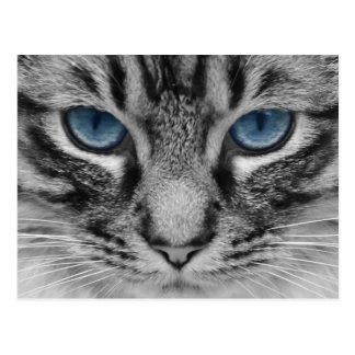 Retrato observado azul hermoso del gato tarjetas postales