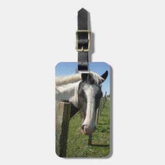 Retrato picazo del caballo etiquetas maletas