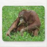 Retrato que se sienta Mousepad del orangután Alfombrilla De Ratones