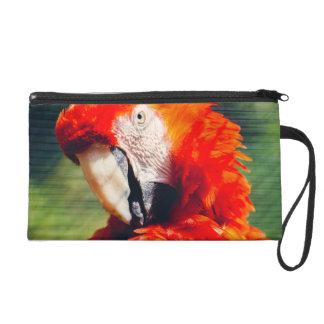 Retrato rojo del loro del Macaw, pájaro exótico