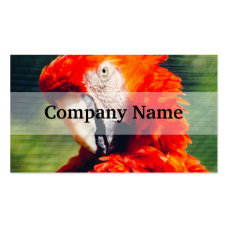Retrato rojo del loro del Macaw, pájaro exótico Tarjetas De Visita