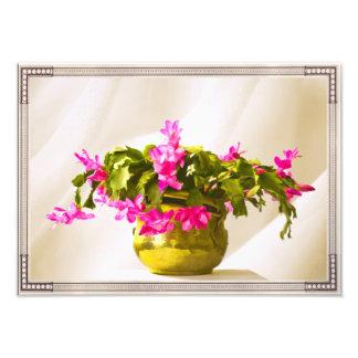 Retrato rosado del cactus de navidad fotografías