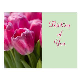 Retrato rosado del tulipán postales
