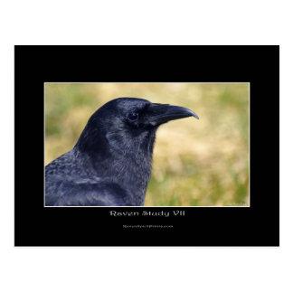 Retrato salvaje de la foto del cuervo postal