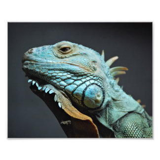 Retrato serio de la iguana arte fotográfico