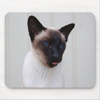 Retrato siamés del gato alfombrilla de raton