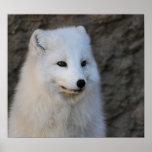 Retratos árticos posters