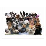 Retratos del perro tarjetas postales