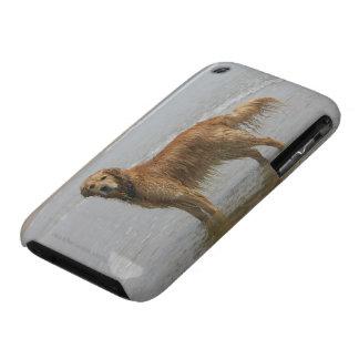 Retreiver de oro en el mar iPhone 3 protectores