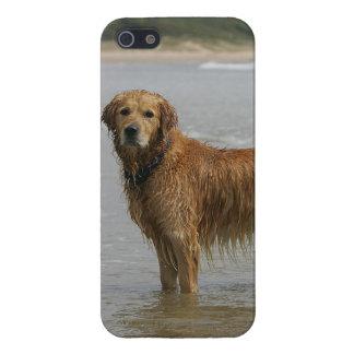 Retreiver de oro en el mar iPhone 5 fundas