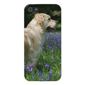 Retreiver de oro en flores iPhone 5 fundas