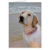 Retriever for Father's Day Card