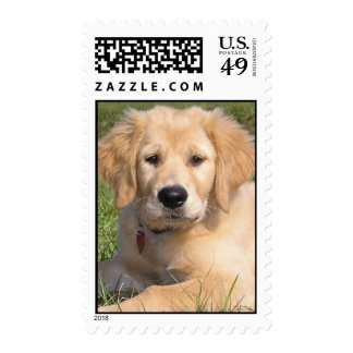 Retriever-K-9 de oro, sello del perrito