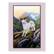 Retro Alaska white mountain sheep illustration Postcard