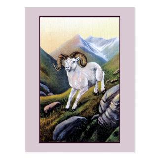 Retro Alaska white mountain sheep illustration Postcard