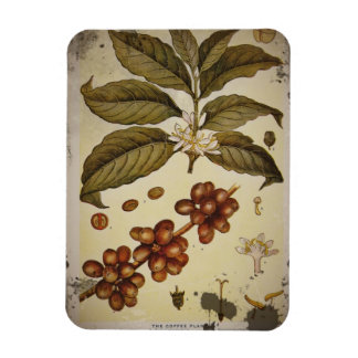 Retro Botanical Image Coffee Magnet